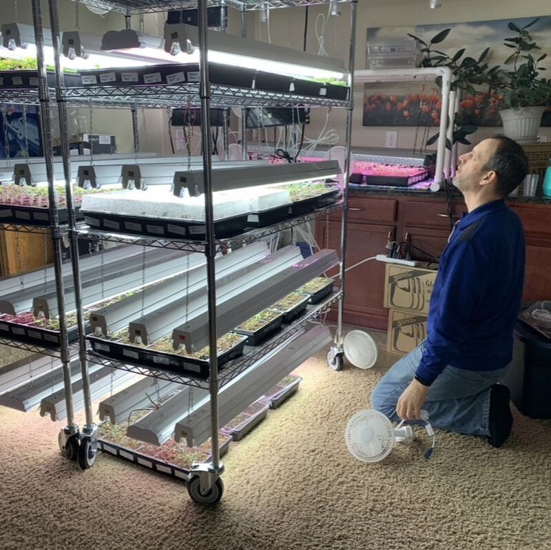 Picture of grow light shelves
